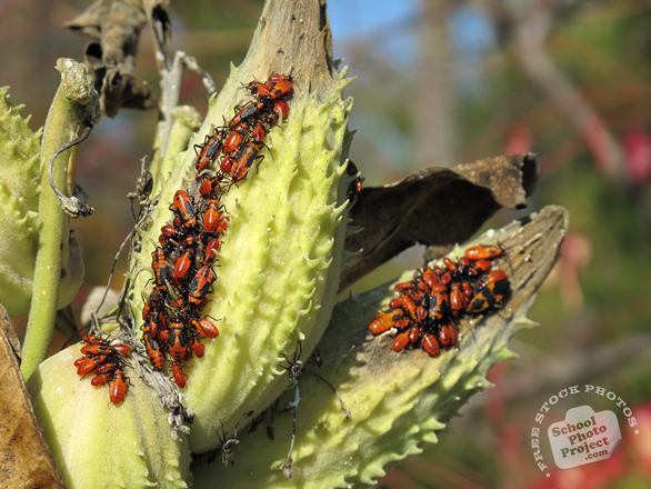 bug's colony, bugs, bug photo, insects, photo, free photo, stock photos, royalty-free image