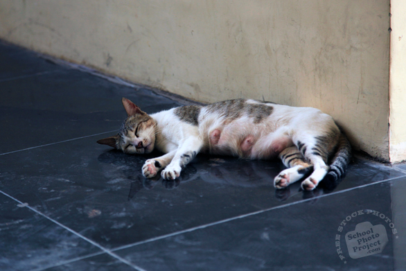 cat, feline, felis, domestic cat, feral cat, stray cat, sleeping cat, mammal, cat photo, cat picture, cat images, animal photo, free photo, stock photos, royalty-free image, free download image, stock images for free, stock photography images