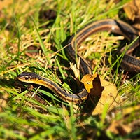 garden snake, snake, wild snake, free animal stock photo, royalty-free image