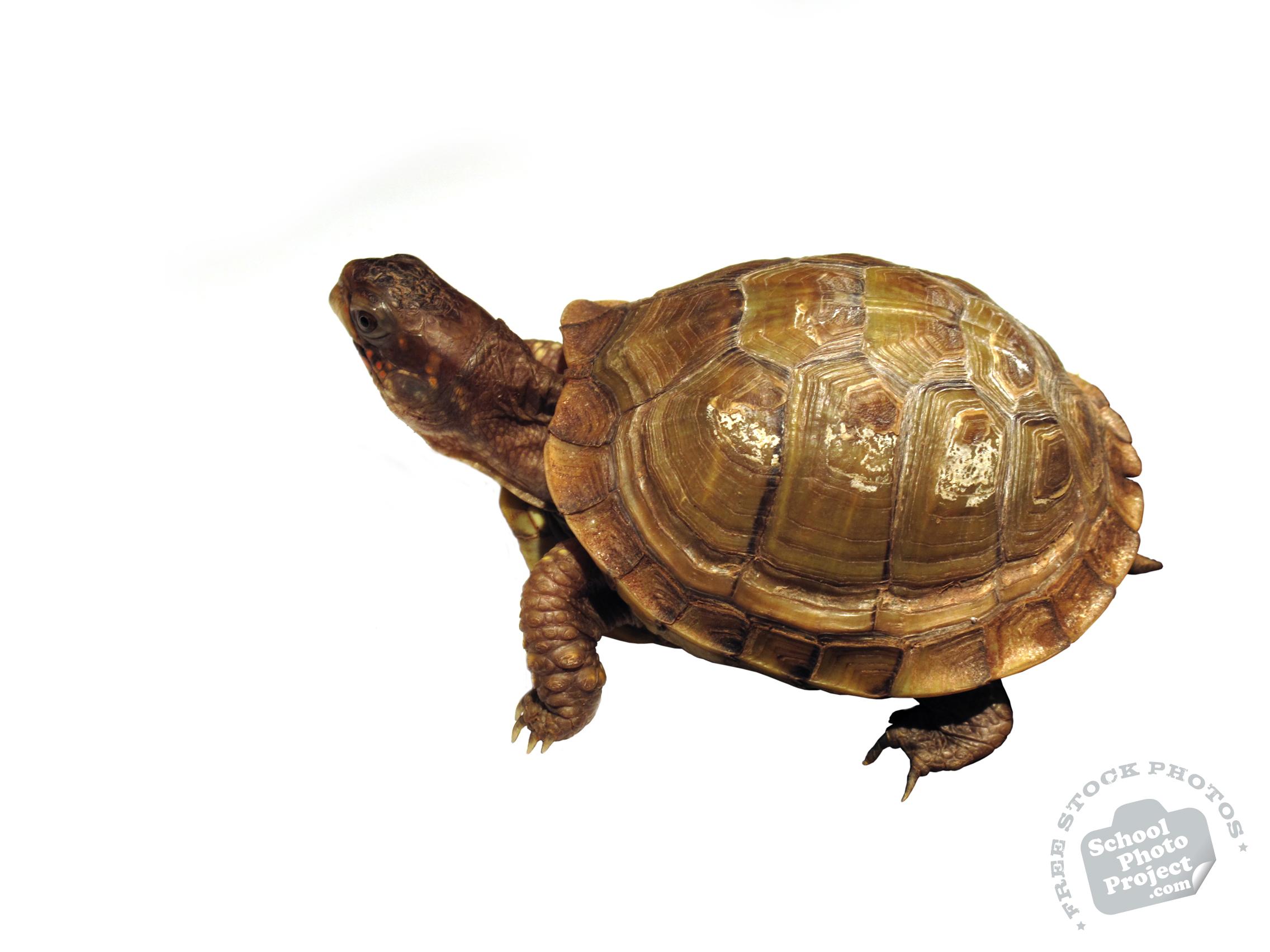 tortoise, turtle, turtle photo, pet turtle, pet, animal, photo, free ...
