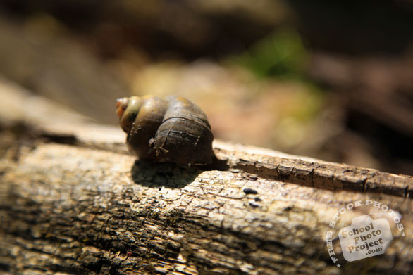 snail, shell, dead snail, free animal stock photo, royalty-free image