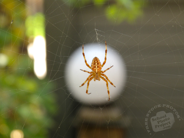 spider, spider photo, arachnid, insect, animal, photo, free photo, stock photos, royalty-free image