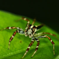 spider, insect, macro photography, free photo, stock photo, free picture, royalty-free image