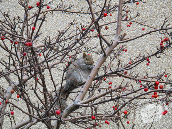 squirrel, squirrel photo, animal, wild animal, grass, photo, free photo, stock photos, royalty-free image