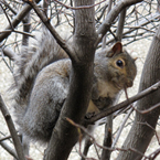 squirrel, tree, animal, wild animal, grass, photo, free photo, stock photos, royalty-free image