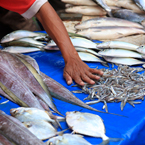 fishmonger, fish market, fish stall, fresh fish, seafood vendor, free stock photo, picture, free images download, stock photography, royalty-free image