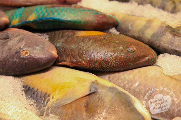 parrotfish, saltwater fish, fish market, seafood, free stock photo, picture, free images download, stock photography, royalty-free image