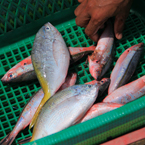 saltwater fish, fish stall, seafood, free stock photo, picture, free images download, stock photography, royalty-free image