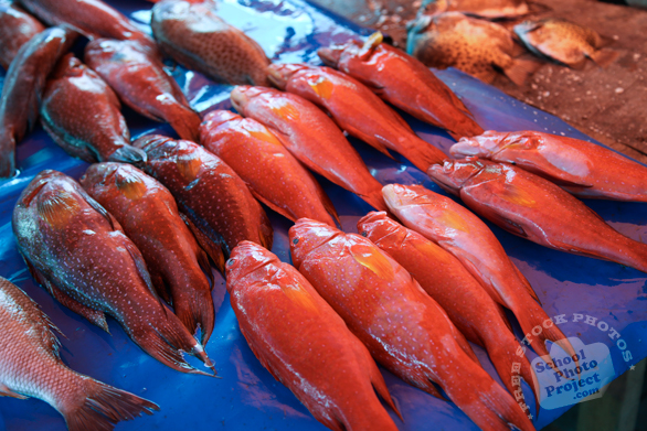 red coral trout, saltwater fish, fish stall, seafood, free stock photo, picture, free images download, stock photography, royalty-free image