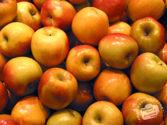 apple, apple photo, red apple picture, fruit photo, free photo, free images, stock photos, stock images, royalty-free image