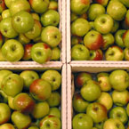 apple, fruits, fresh fruit, fruit photos, photo, free photo, stock photos, royalty-free image