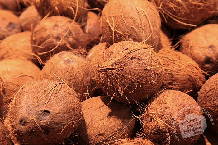 brown coconuts, coconut photo, tropical fruit, fruit photos, free photo, stock photos, free picture, stock photography, stock images, royalty-free image