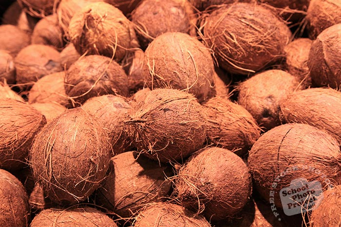 brown coconuts, huskless coconut photo, tropical fruit, fruit photos, free photo, stock photos, free picture, stock photography, stock images, royalty-free image