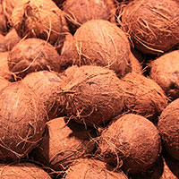 coconuts, brown coconut picture, free photo, royalty-free image