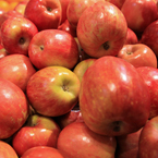 Fuji Apples, red apples, apple photos, fruit photos, free foto, free photo, stock photos, picture, image, free images download, stock photography, stock images, royalty-free image