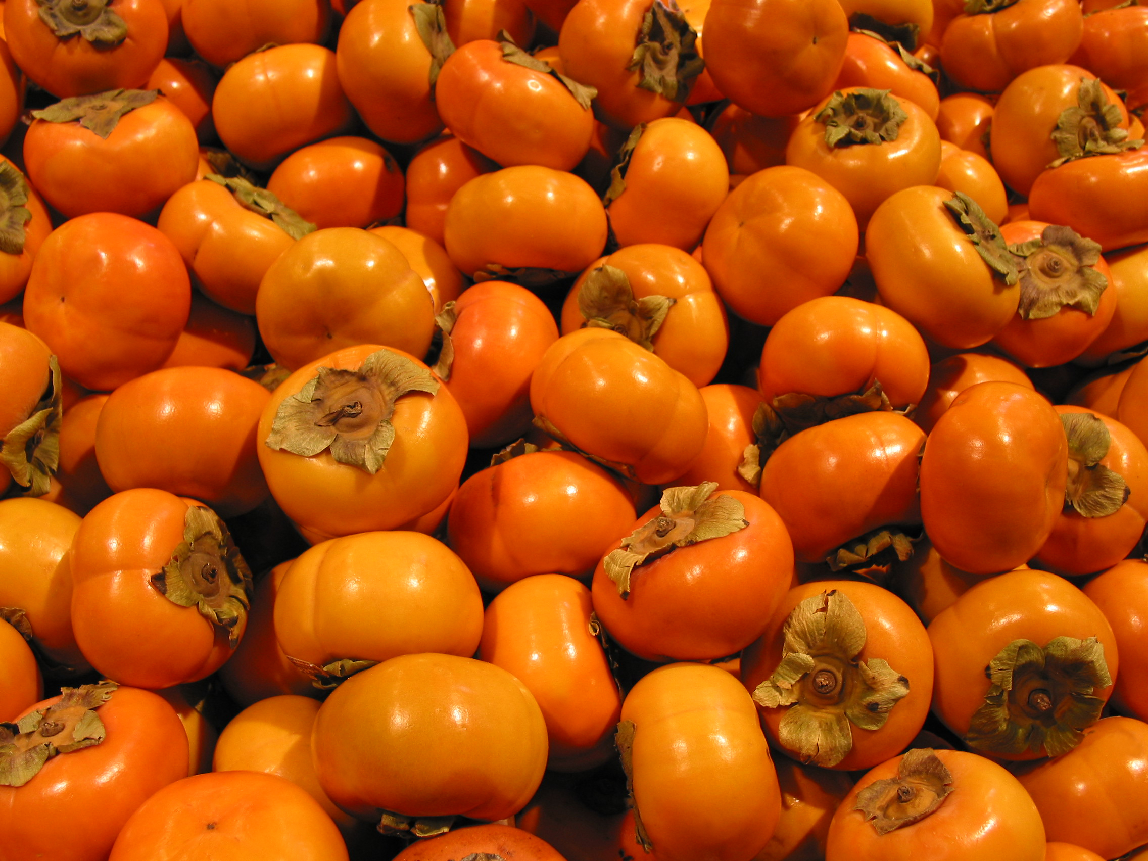 free persimmon photo persimmon picture persimmons image royalty