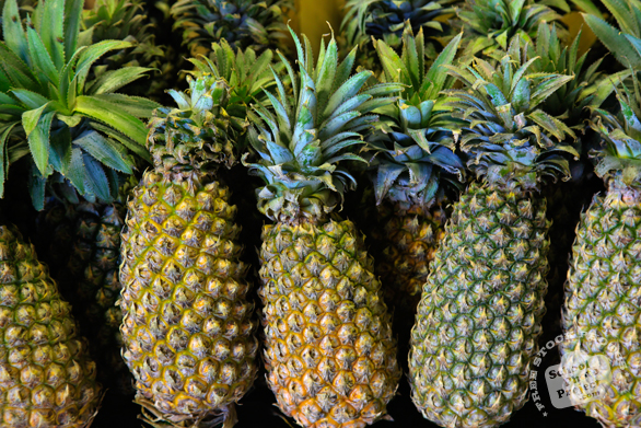 pineapples, pineapple photo, picture of pineapples, tropical fruit photo, free stock photo, free picture, stock photography, stock images, royalty-free image