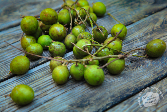 melicoccus bijugatus, quenepas, mamoncillos, ackee, gineps, kenep, Spanish limes, gineppes, free picture, stock photo, free image download, stock photography, stock image, royalty-free image