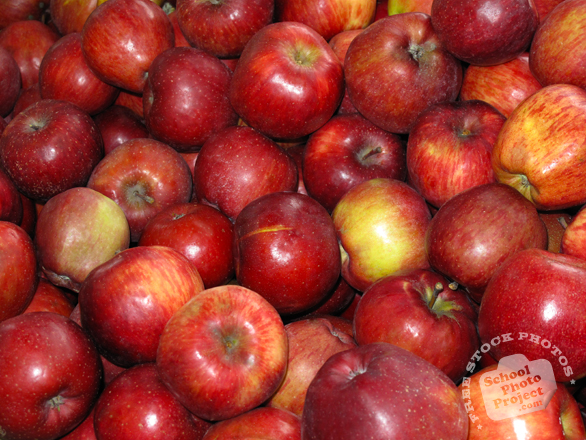 red apple, apple photo, picture of apples, fruit photo, free images, stock photos, stock images, royalty-free image