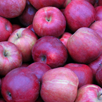 apple, red apple, apple photo, apple picture, apple image, fruits, fresh fruit, fruit photos, photo, free photo, stock photos, royalty-free image