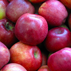 apple, red apple, apple apple picture, apple image, fruits, fresh fruit photo, free stock photo, royalty-free image