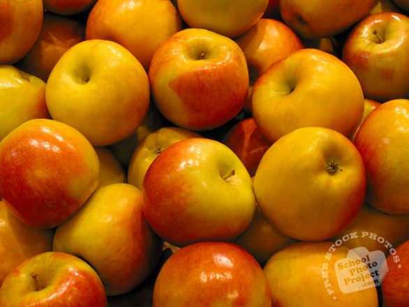 apple, red apple photo, yellow apples, picture of red yellow apples, fruit photo, free images, stock photos, stock images, royalty-free image