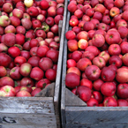 apple, red apple, apple stall, apple photo, apple picture, apple image, fruits, fresh fruit, fruit photos, photo, free photo, stock photos, royalty-free image