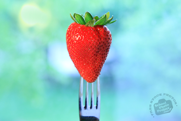 strawberry, strawberry photos, picture of strawberry with fork, fruit photo, utensil fork, free stock photo, free picture, stock photography, stock images, royalty-free image