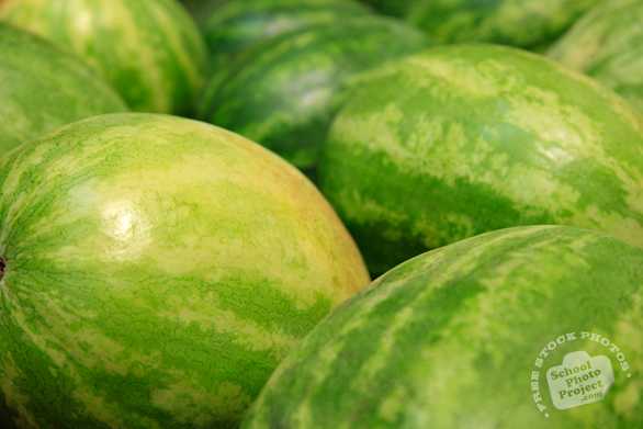 watermelons, fresh watermelons, watermelon photo, picture of watermelons, fruit photo, free stock photo, free picture, stock photography, stock images, royalty-free image