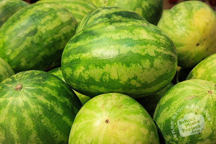 Sweet Favorite watermelons, seedless watermelons, watermelon photo, picture of watermelons, fruit photo, free stock photo, free picture, stock photography, stock images, royalty-free image