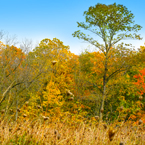 trees, weeds, colorful autumn leaves, fall season foliage, panorama, nature photo, free stock photo, free picture, stock photography, royalty-free image