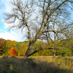bare trees, oak, maple, meadow, colorful autumn leaves, fall season foliage, panorama, nature photo, free stock photo, free picture, stock photography, royalty-free image