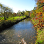 creek, river, bare trees, colorful autumn leaves, fall season foliage, panorama, nature photo, free stock photo, free picture, stock photography, royalty-free image
