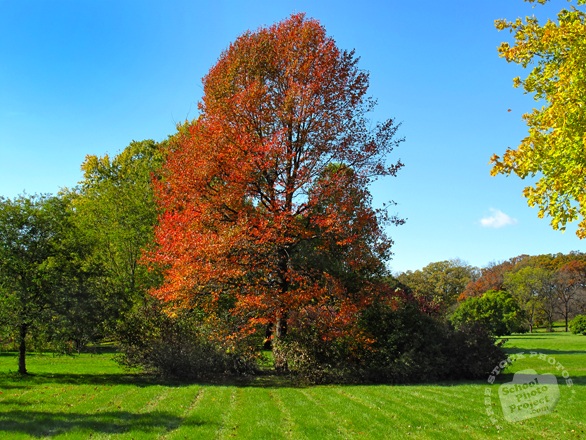 oak, maple, Canada trees, meadow, colorful autumn leaves, fall season foliage, sunny sky, panorama, nature photo, free stock photo, free picture, stock photography, royalty-free image