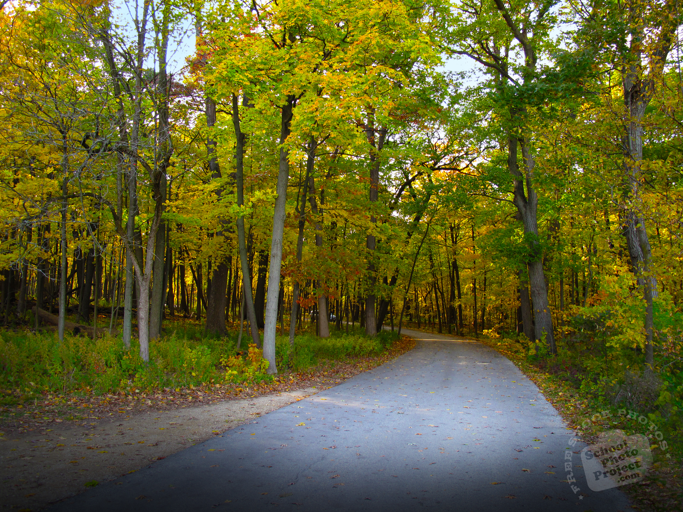Free Forest Path Photo Tree Canopy Picture Autumn Panorama Image