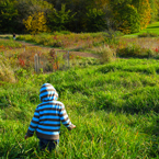 boy walking in meadow, grassy, colorful autumn leaves, fall season foliage, sunny sky, panorama, nature photo, free stock photo, free picture, stock photography, royalty-free image