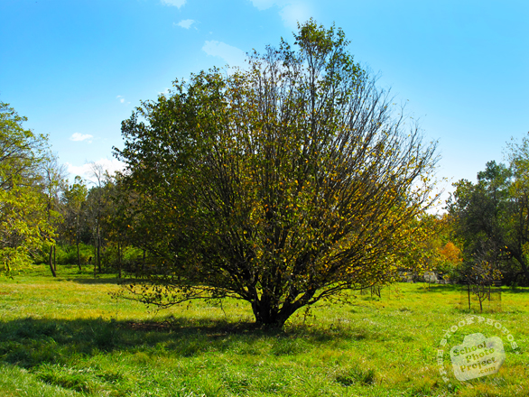 orchard, meadow, grassy, sunny sky, colorful autumn leaves, fall season foliage, panorama, nature photo, free stock photo, free picture, stock photography, royalty-free image