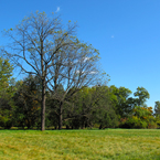 bare trees, oak, maple, meadow, grassy, sunny sky, colorful autumn leaves, fall season foliage, panorama, nature photo, free stock photo, free picture, stock photography, royalty-free image