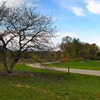 bare trees, path way, grassy, sunny sky, colorful autumn leaves, fall season foliage, panorama, nature photo, free stock photo, free picture, stock photography, royalty-free image