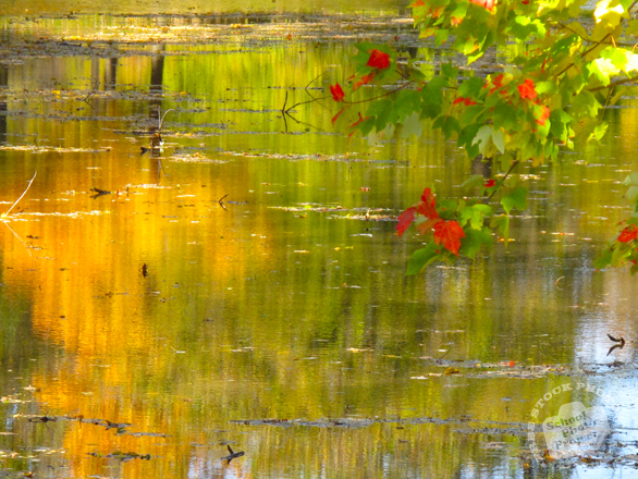 water reflection, creek, river, red maple leaves, fall season foliage, panorama, nature photo, free stock photo, free picture, stock photography, royalty-free image