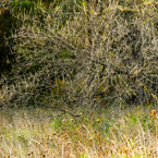 grove, thicket, scrub, underbrush, weeds, bare trees, meadow, fall season foliage, panorama, nature photo, free stock photo, free picture, stock photography, royalty-free image