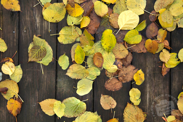 autumn leaves, dead leaf, fall season, wood planks, nature photo, free stock photo, free picture, stock photography, royalty-free image