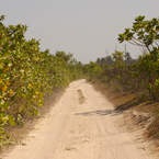 sandy beach, path way, trees, plants, nature photo, free stock photo, free picture, stock photography, royalty-free image