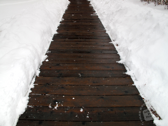 snow, thick snow, path, walkway, wood planks, blizzard, snowstorm, winter season, nature photo, free stock photo, free picture, stock photography, royalty-free image