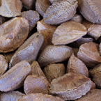 nut, nuts, brazilian nuts, brazilian nut photo, nuts picture, free photo, free download, stock photos, royalty-free image