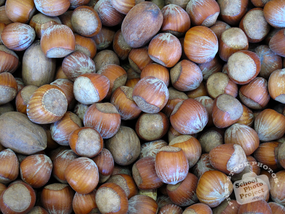 hazelnuts, hazelnut photo, hazelnut in shell, nuts picture, free photo, free download, stock photos, royalty-free image