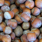 hazelnuts, hazelnut photo, nuts picture, free photo, free download, stock photos, royalty-free image