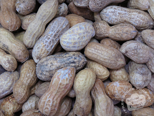 nut, nuts, peanuts, peanut in shell, peanut photo, nuts picture, free photo, free download, stock photos, royalty-free image
