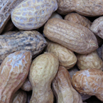 nut, nuts, peanuts, peanut photo, nuts picture, free photo, free download, stock photos, royalty-free image