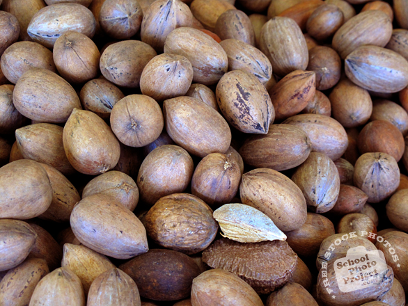 nut, nuts, pecans, pecan photo, pecan in shell, nuts picture, free photo, free download, stock photos, royalty-free image